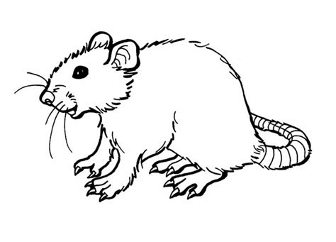 coloring for toddlers free free printable rat coloring pages for