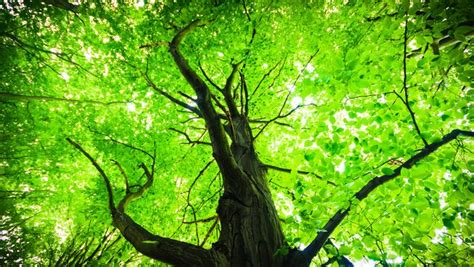 environmentally friendly trees going green when it s your time to go mnn nature network