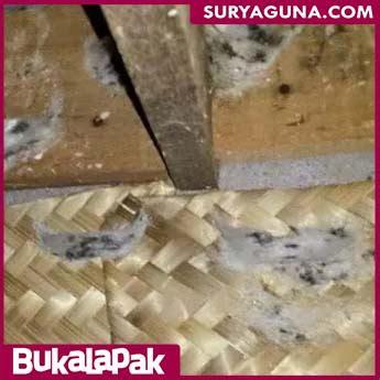 Jangkrik Pakan Walet besek bambu sarang burung walet alami suryaguna