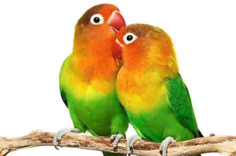 images of love birds hd love bird wallpapers wallpaper cave