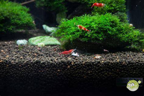 Nano Aquarium Pflanzen by Pflanzen Im Nanoaquarium Nanoquarium