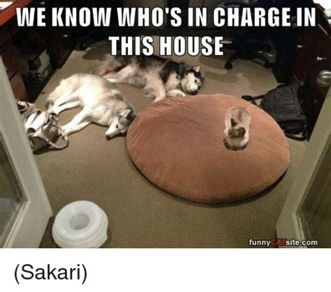 Who Is In Charge Of The House Of Representatives by 25 Best Memes About Cat Cat Memes