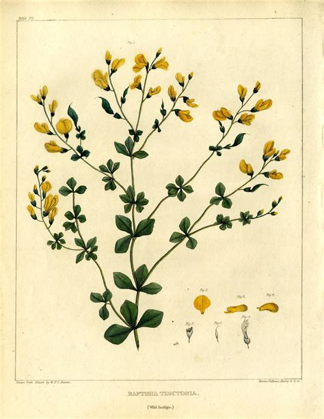 Materia Medika vegetable materia medica of the united states 183 center for the history of medicine onview