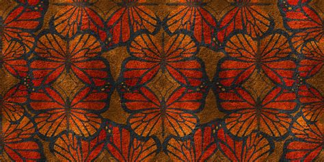 butterfly pattern stock butterfly pattern free stock photo public domain pictures