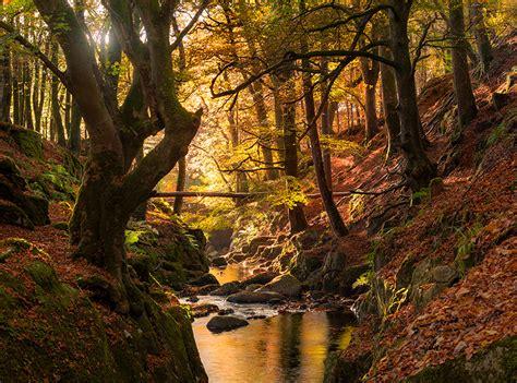 the woodlands lights woodland light