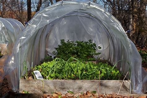 hoop house gardening in winter edible plants that you can grow in autumn and winter