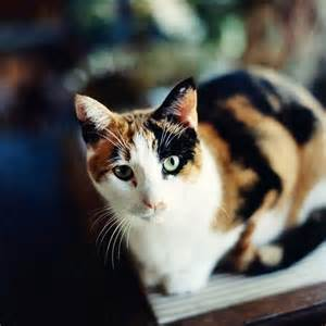 50 creative calico cat names