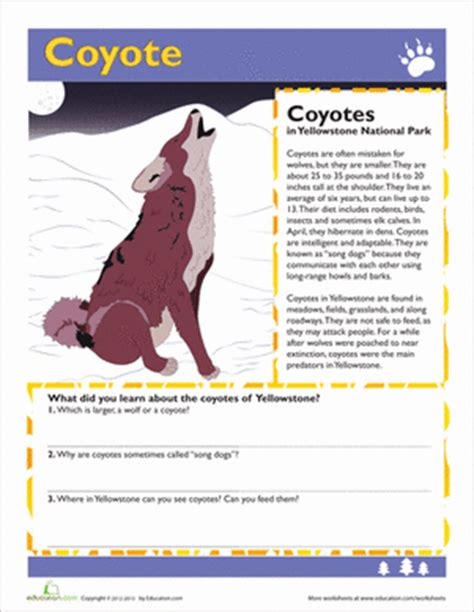 facts about coyotes for kids coyote facts worksheet education com