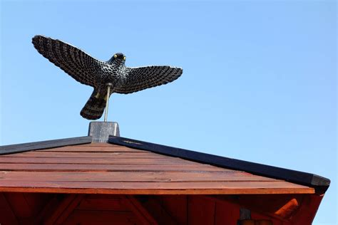 come scacciare i piccioni dal terrazzo come allontanare i piccioni dalla prpria casa oknoplast