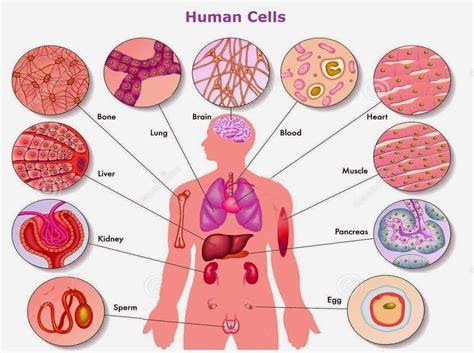 Biologi Jilid Ii Neil A Cbell mengapa bentuk dan ukuran sel dalam tubuh berbeda beda membuka mata tentang biologi