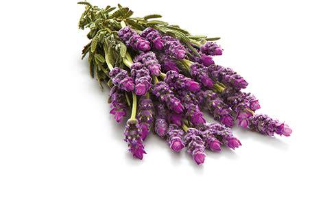 Glade Lavender lavender glade fragrances