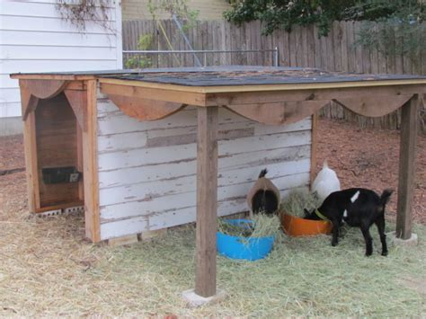 Goat Shed For Sale by Dairy Goat Barn Plans House Design And Decorating Ideas