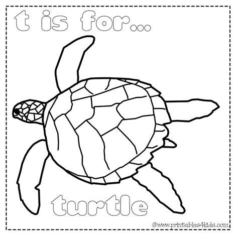 preschool coloring pages turtles sea turtle preschool coloring coloring pages