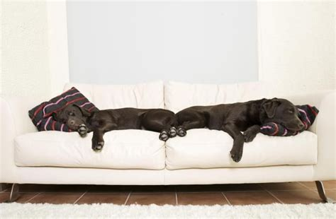 Pet Friendly Fabric by Keep Your Home Fresh With 5 Pet Friendly Fabrics Home