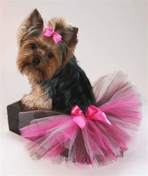 yorkie clothes patterns 71 best images about doggie clothes patterns on yorkie dress sewing