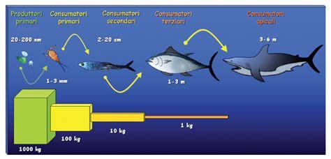 catena alimentare mare l insostenibile impatto della pesca industrialeblog