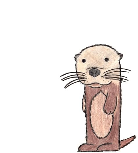 Otter Drawing