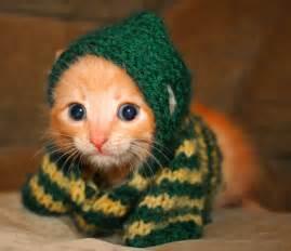 Light Up Ugly Christmas Sweater Cute Kitten Cats Photo 6987468 Fanpop