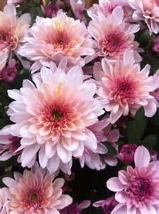 flower flowers photo 35212537 fanpop