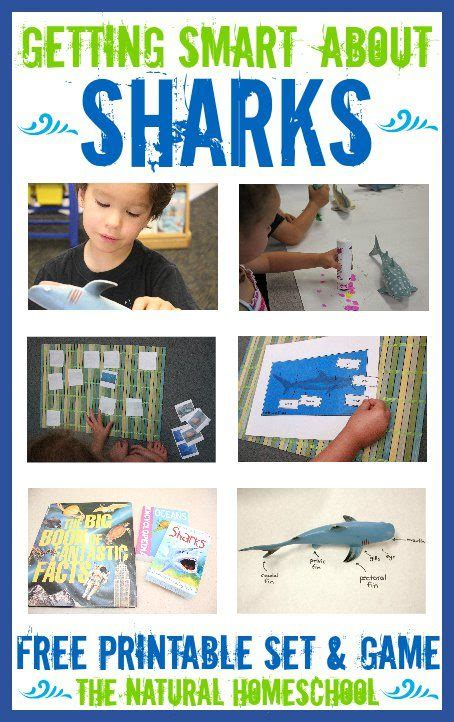libro smart about sharks getting smart about sharks with free printables