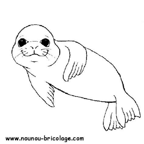 coloriage phoque les beaux dessins de animaux 224 imprimer