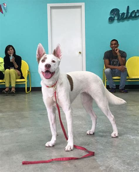 puppy cafe la move cat cafes this cafe is all kinds of
