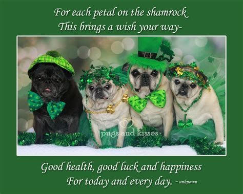 st patricks day pug st s day all things on 188 images on iris
