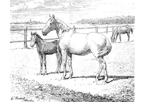 coloring pages of horses and foals 17 best images about coloring horses on pinterest