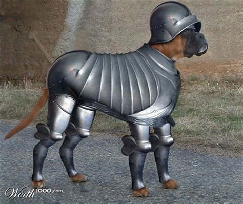 armour dogs googled quot in armor quot was not disappointed viralswarm