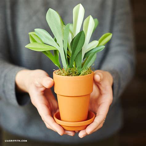 Paper Plant - potted paper house plant lia griffith
