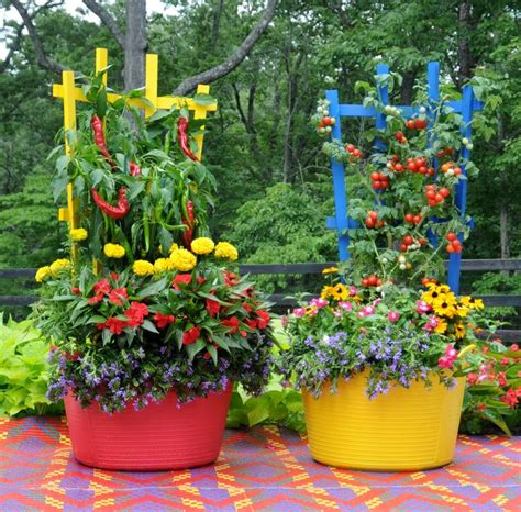 patio vegetable garden containers 49 best images about herbs veggies in container gardens