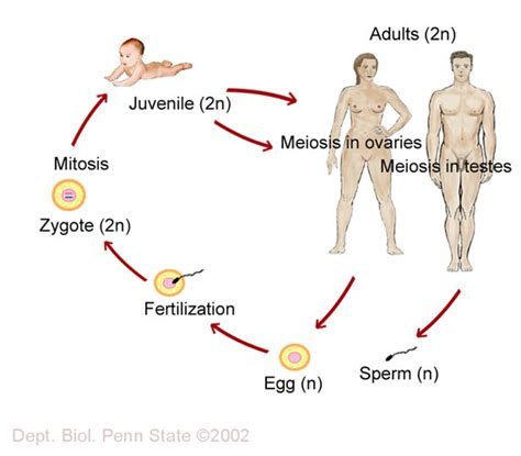 this diagram of the human cycle shows that space theology astrotheology april 2012
