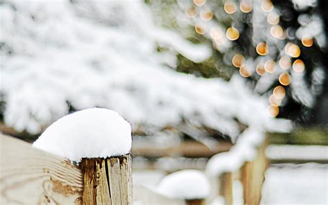 christmas lights on fence fence wood snow trees branches winter bokeh lights
