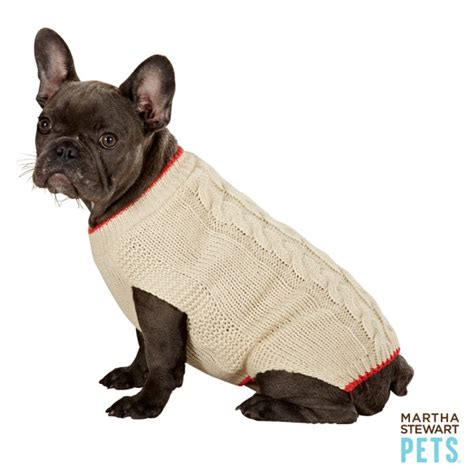 petsmart sweaters no really your may need a winter coat