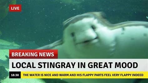 Stingray Meme - wholesome stingray wholesomememes