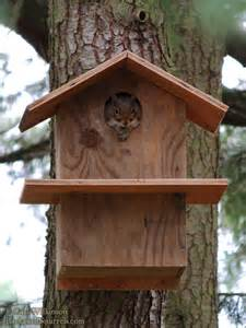 squirrel house plans all archives backyard squirrels