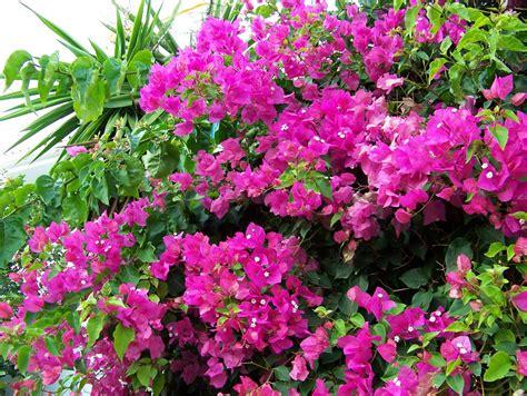 imagenes de flores gratis imagenes de plantas con flores fondo en hd para