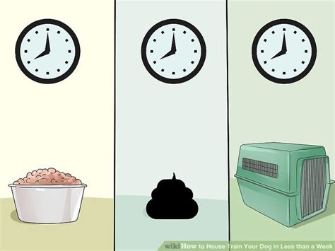 how to house train a dog in 7 days 3 ways to house train your dog in less than a week wikihow
