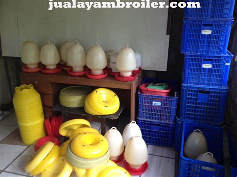 Jual Bibit Ayam Broiler Di Bogor jual ayam broiler di sentul selatan bogor jual ayam broiler