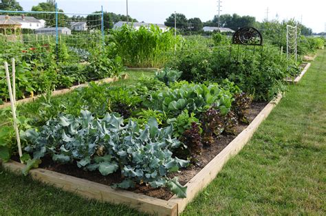 gardening pictures free money and help for a school garden garden housecalls