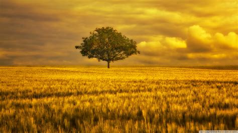 wallpaper trees gold best wallpaper 20 great summer wallpapers