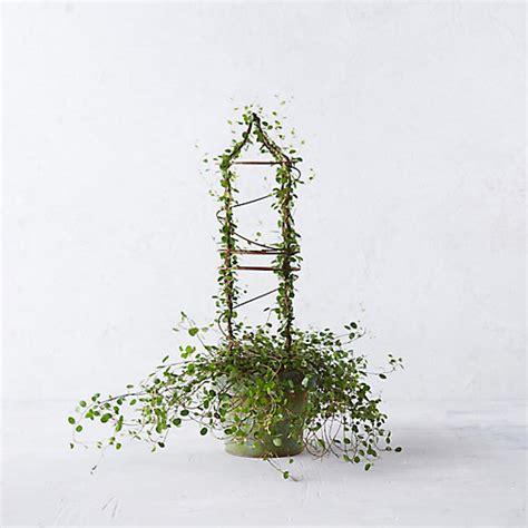 vine topiary vine spiral topiary terrain