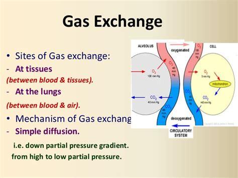 respiratory gas exchange bing images pulmonary gas exchange bing images