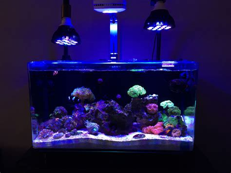 ai fish tank lights ai prime settings informational only no discussion
