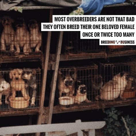 puppy mill vs breeder overbreeding dogs definition risks disambiguation