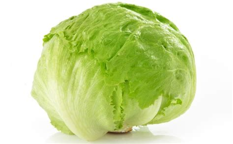 is lettuce bad for dogs lettuce gallery