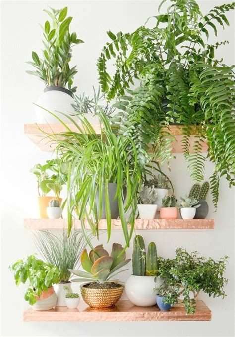 decorative indoor plants decorative plants indoor home design