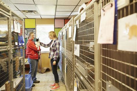 Kennel Assistant Salary by Career Profile Of An Animal Shelter Manager