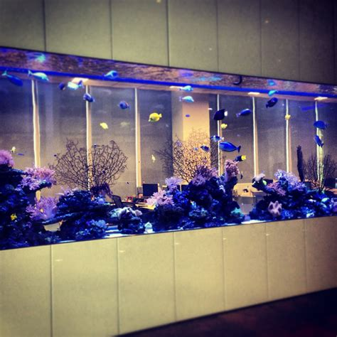 Office Fish Tank by Bloomberg Fish Tank Bloomberg L P Office Photo