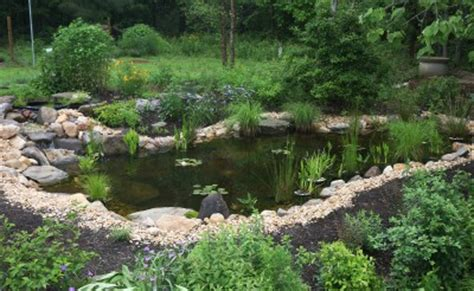 backyard frog pond frog friday this create your own frog pond